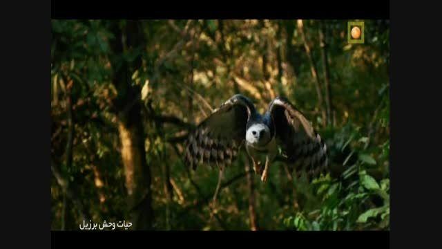 مستند حیات وحش برزیل با دوبله فارسی - قسمت دوم