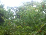 بارش باران شدید بهار در کردکوی