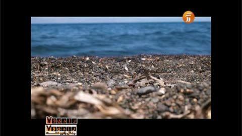 نماهنگ چشمه دریا با صدای محمد ساوه