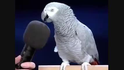 یک طوطی به نام اینشتین