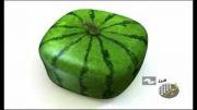 هندوانه مربعی، شش ضلعی!!!!