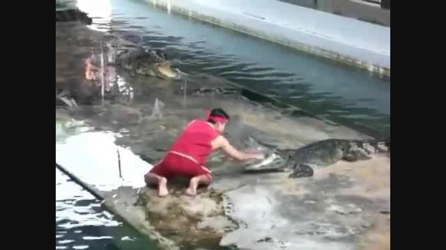 حادثه غیر منتظره در نمایش کروکودیل ها در تایلند