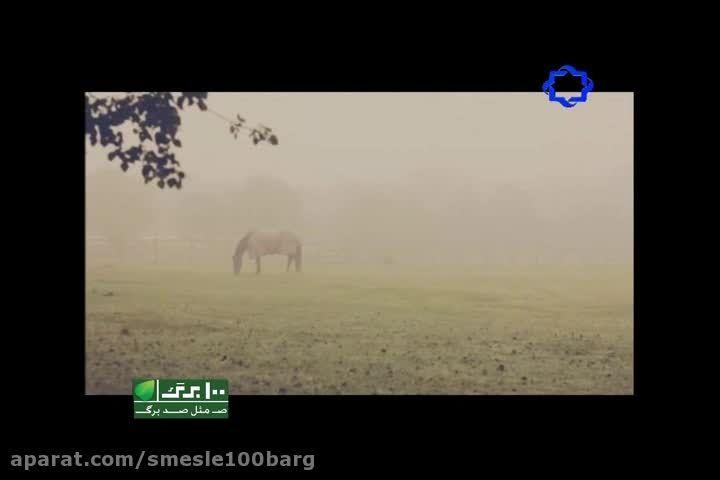 نماهنگ فریاد با صدای علی زند وکیلی