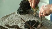 روش کاشت گیاه در آکواریوم