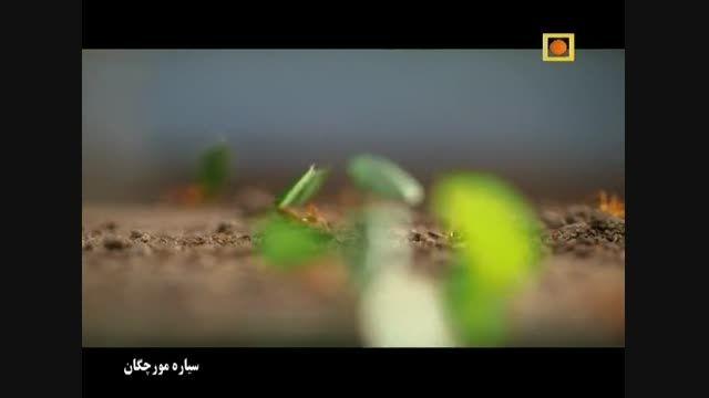 مستند سیاره مورچگان با دوبله فارسی