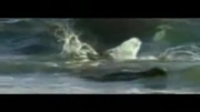 کلیپ جالب دنیای حیوانات - نهنگ قاتل