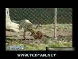 کنترل توپ توسط سگ