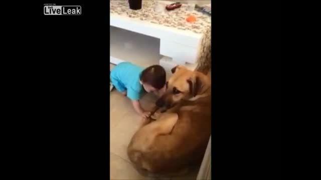 گار گرفتن سر بچه توسط سگ