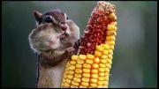 این سنجاب کوچولو لایک نداره؟؟؟