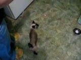 soar a cat