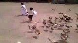 آخر خنده !!حمله بامزه مرغ و خروس ها.. !!!