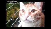 وقتی گربه افسرده میشود :((