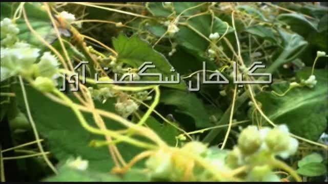 مستند گیاهان شگفت  آور با دوبله فارسی