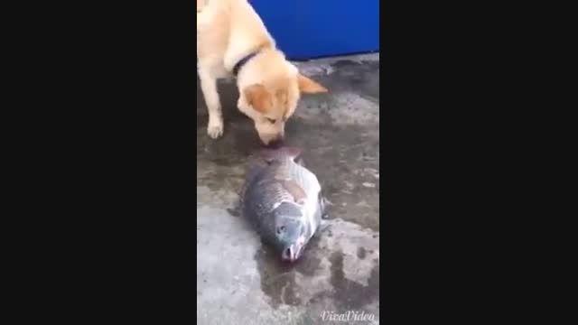 مهربان ترین سگ دنیا میخواد ماهی هارو نجات بده