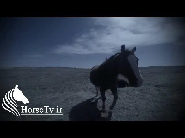 پرش با اسب از دید سوارکار