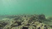 فیلمبرداری از اعماق خلیج فارس