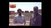 افزایش باردهی باغ انگور - استان قزوین