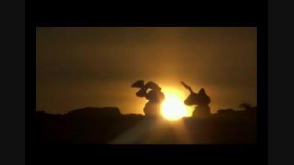 شکار روباه توسط عقاب دست آموز