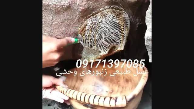 عسل زنبورهای وحشی، مستند عسل طبیعی کوهی