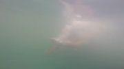 فیلم برداری با دوربین گوپرو در آب