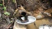 ظرف شستن میمون