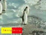 شوخی بامزه از پنگوئن - حتما ببینید