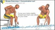 حرکات بدن سازی دو سر بازو - Concentration curls