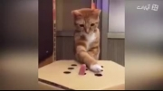 گربه ی دوست داشتنی