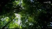 مستند آمازون از مجموعه نادیده های طبیعت آمریکای