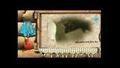 ختم به شهادت-شهیداحمدکاظمی