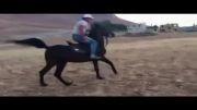 شوان اسب اصیل کرد در سن 25 سالگی