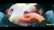 حمله سگ به صورت مجری