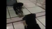 واکنش های حیوانات در برابر آینه ( پارت 3 )