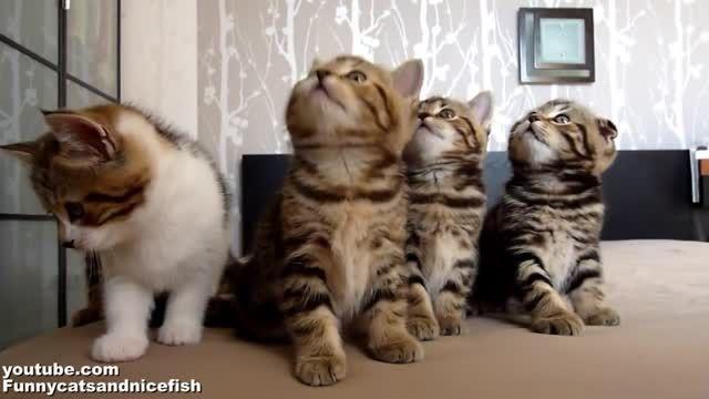 حرکات دیدنی و خنده دار بچه گربه های ناز