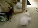 سگ آینه ندیده