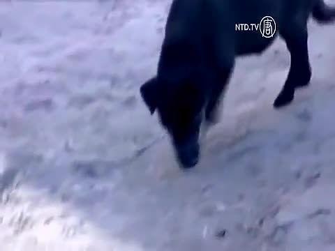 سگی که جان یک دختر بچه را نجات داد