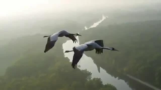 پرواز کنار پرندگان مهاجر
