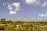 مستند قاتلین بالفطره بیابان-National Geographic Built For The Kill Desert  .flv
