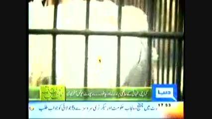 بازار پرندگان کراچی پاکستان