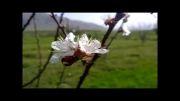 طبیعت زیبای روستای مالمیر-الشتر