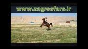 سواری اسب دره شور دیبا