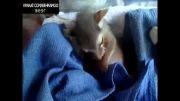 به دنیا آمدن بچه گربه عجیب..!