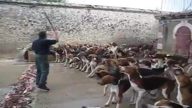 سگ های با شعور موقع خوردن غذا