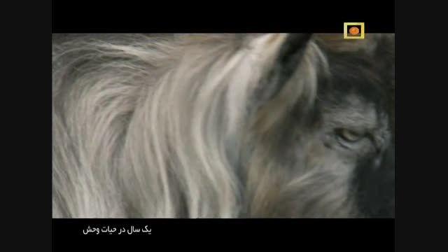 مستند یک سال در حیات وحش با دوبله فارسی - قسمت اول