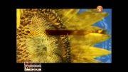 نماهنگ پاییز با صدای بنیامین بهادری