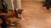 حرکات عجیب و غریب سگ در بازی با تخم مرغ...