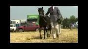 گزارش شبکه تلویزیونی بی بی سی فارسی درباره اسبچه خزری