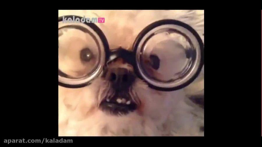 گلچینی از ویدئوهای خنده دار حیوانات