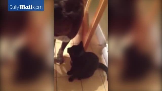 علاقه شدید یک گربه به سگ