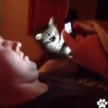 گربه ی بازیگوش !!!!   (-: